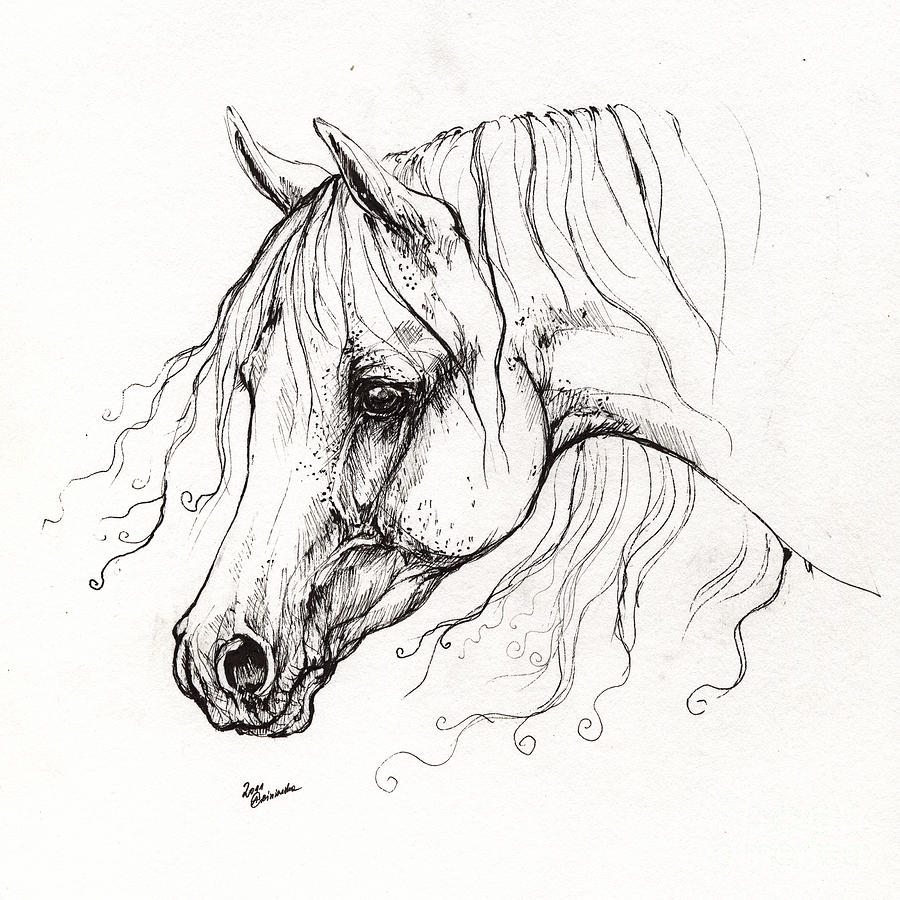 900x900 Printable Horse Profile Drawing
