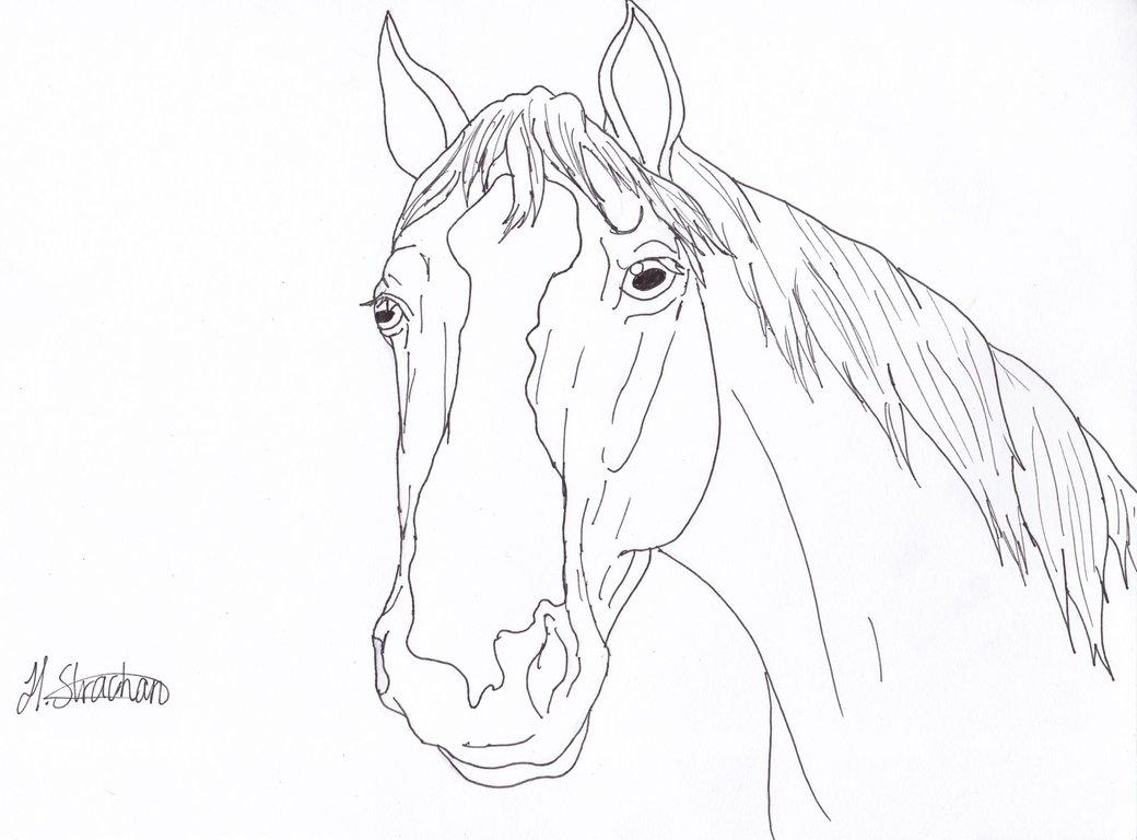 1040x768 Horse Profile Line Art By Hopelesslife