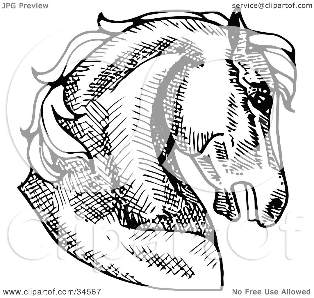 Horse Profile Drawing at GetDrawings.com | Free for personal use ...