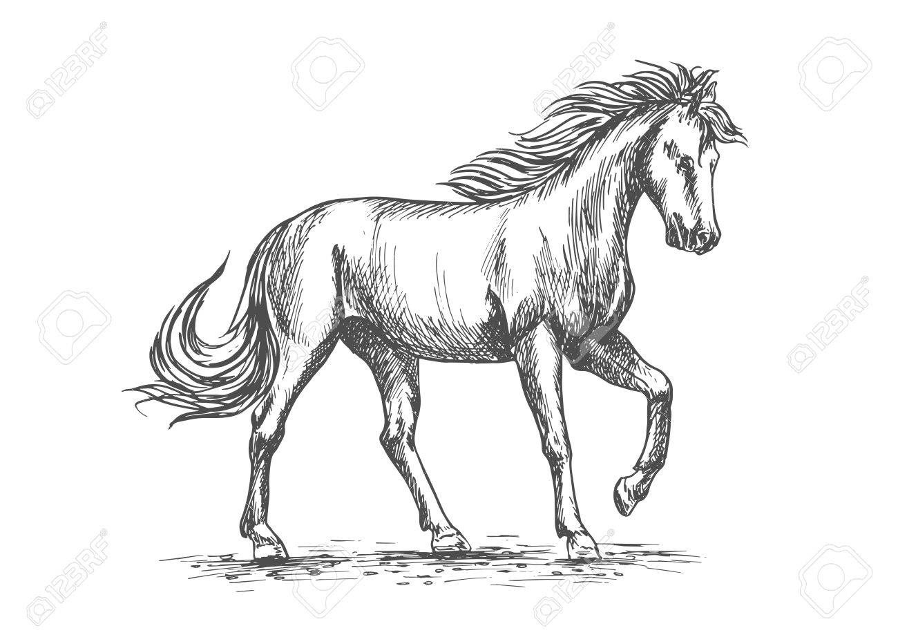 1300x919 Horse Isolated Sketch With Purebred Arabian Stallion Horse Pawing