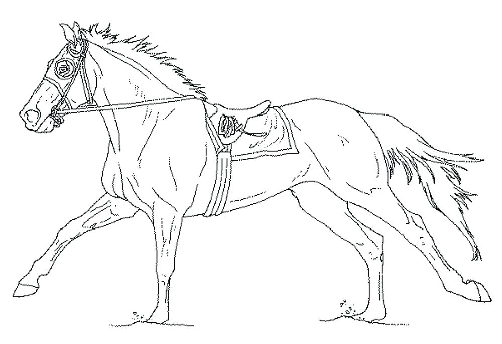 1000x685 Pretty Horse Coloring Pages For Girls Printable In Funny Draw Page