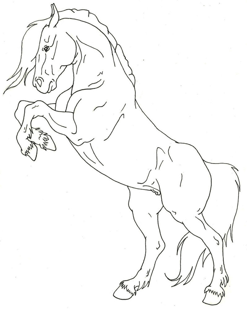 Horse Rearing Drawing at GetDrawings.com   Free for personal use ...