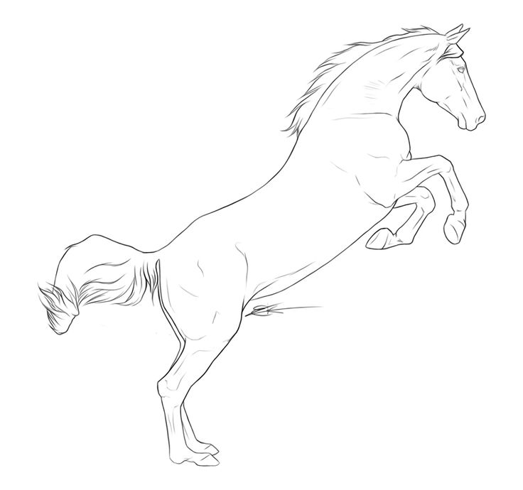 Horse Rearing Up Drawing at GetDrawings.com | Free for personal use ...