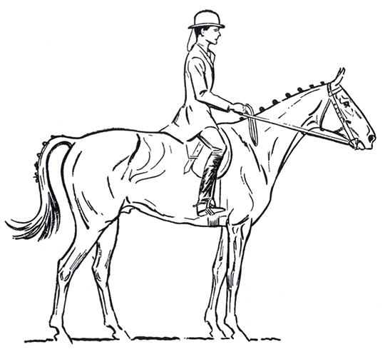 540x500 Four Showjumping Masters Part 4 Gordon Wright The Horse Magazine