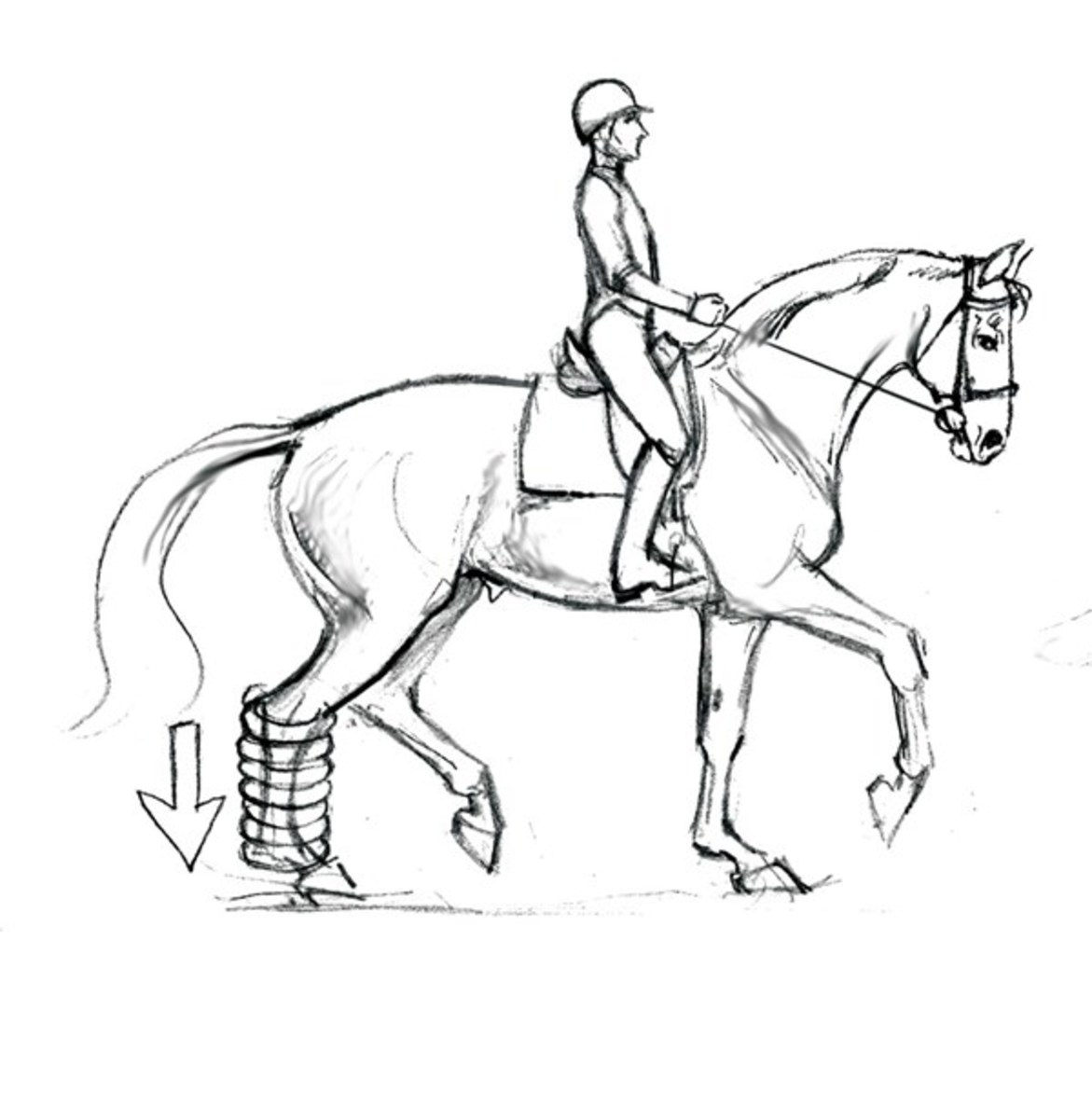 1171x1200 Optimizing Your Dressage Horse's Soundness From The Saddle