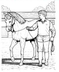 240x290 Horse Riding Lessons. Horseback Riding Instructions. Horse Riding