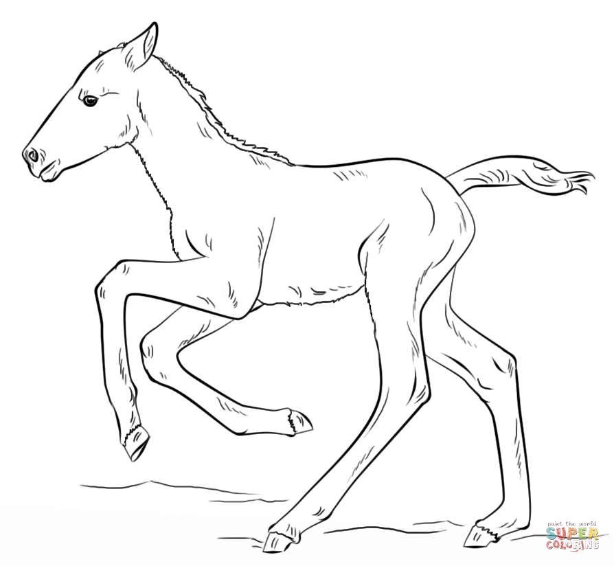 894x824 Cute Running Foal Coloring Page Free Printable Pages