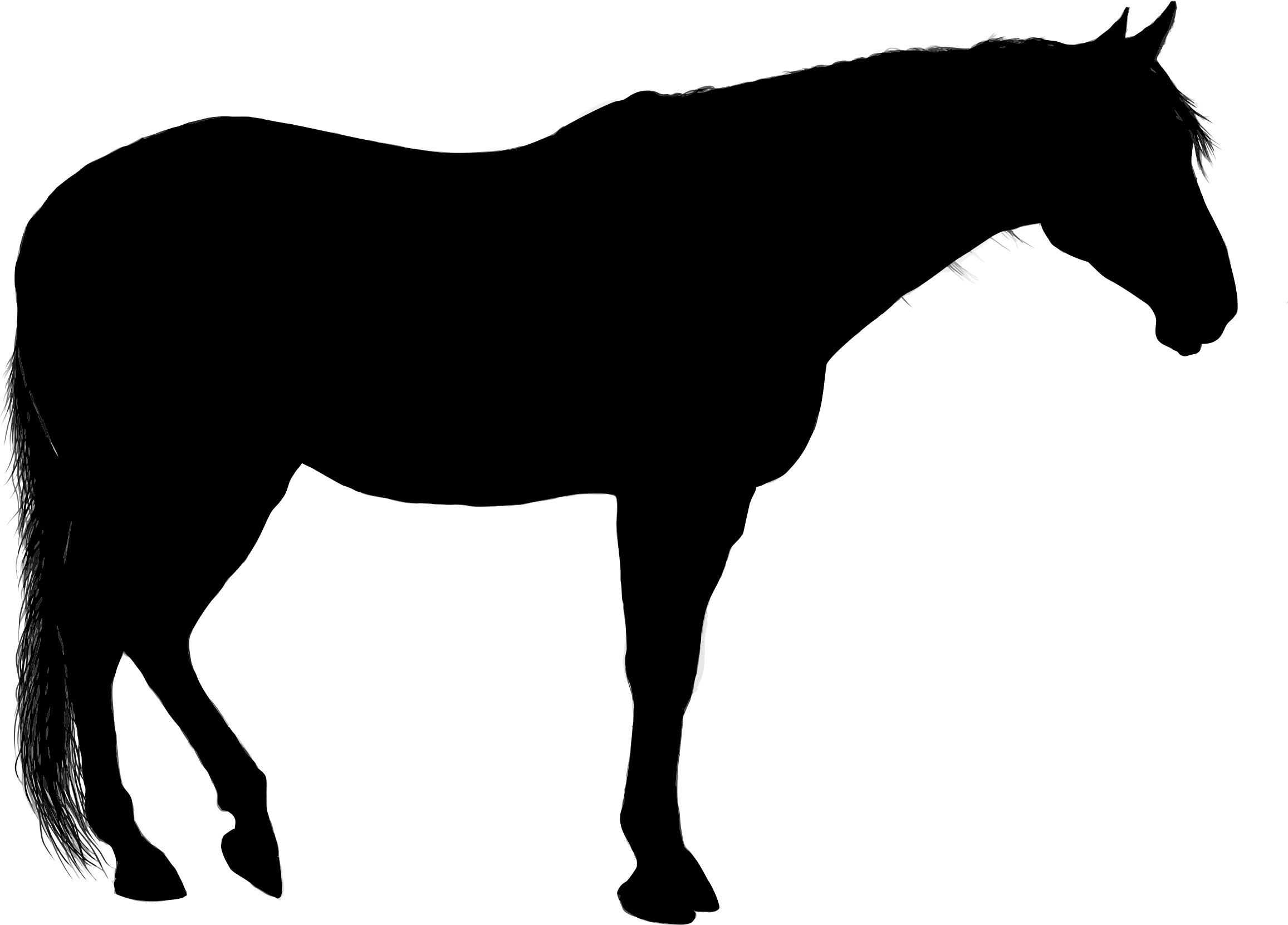 2313x1661 Horse Silhouette