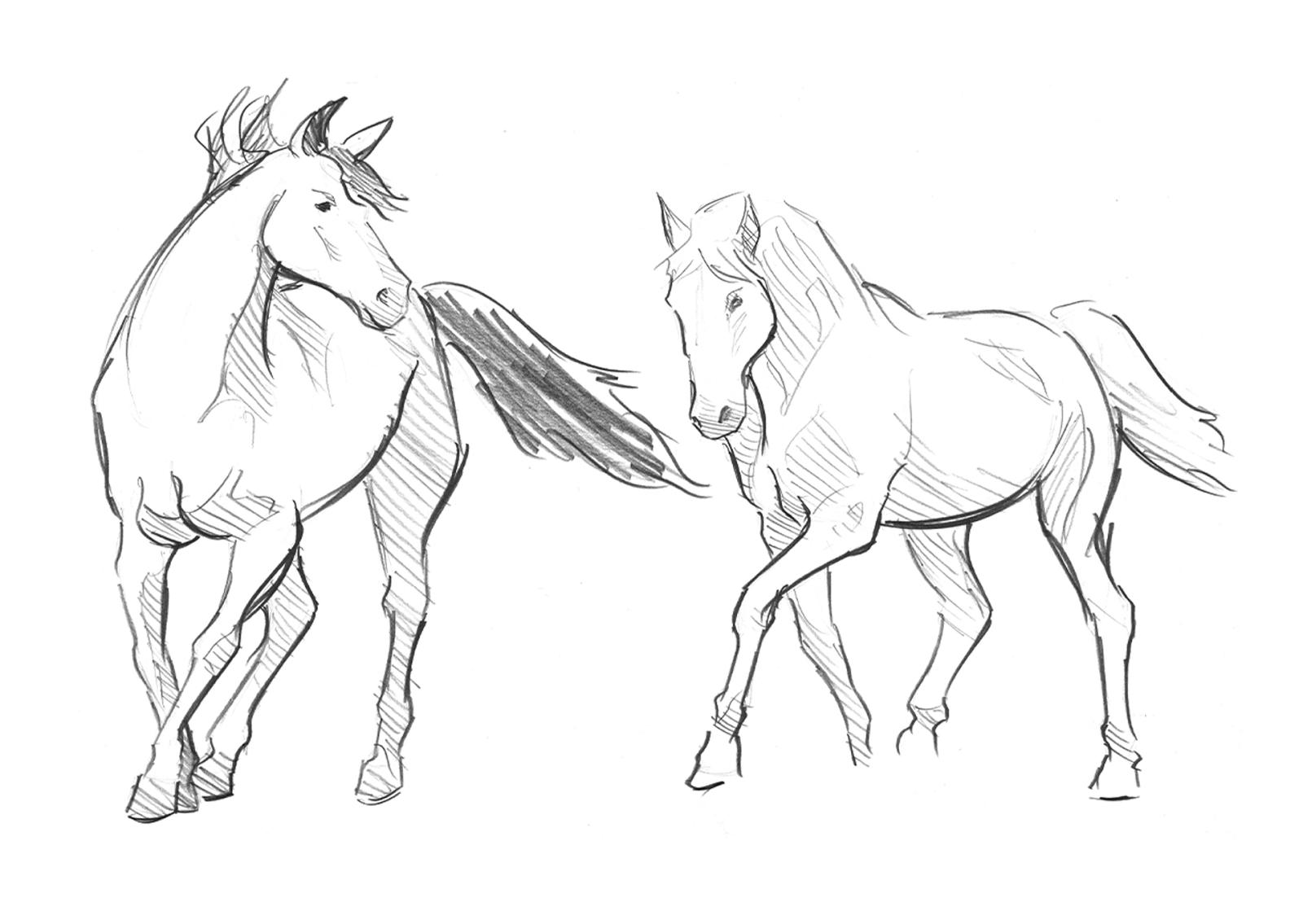 1600x1135 Horse Motion Studies Jackson Turcotte