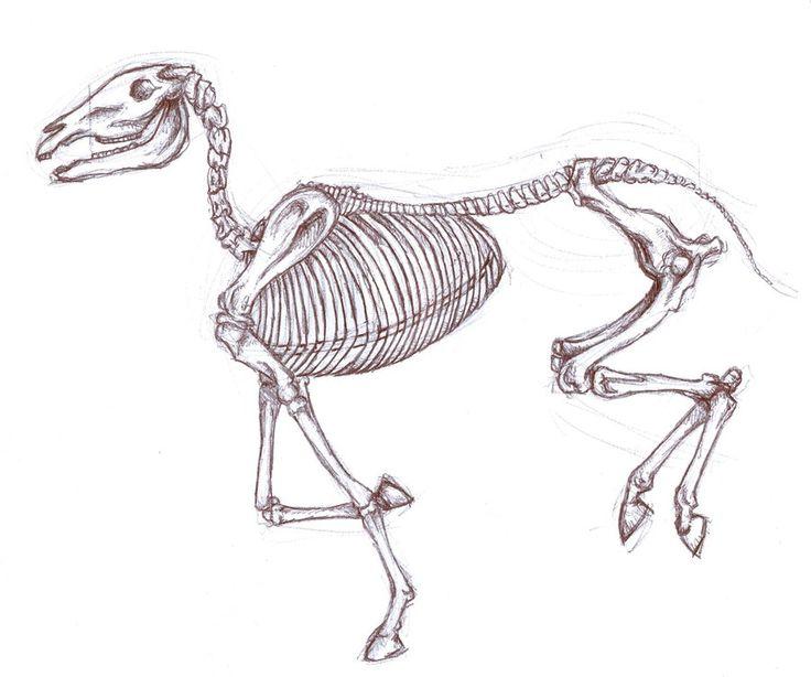 Horse Skeleton Drawing