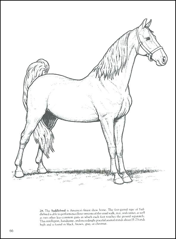Horse Skeleton Drawing at GetDrawings.com | Free for personal use ...