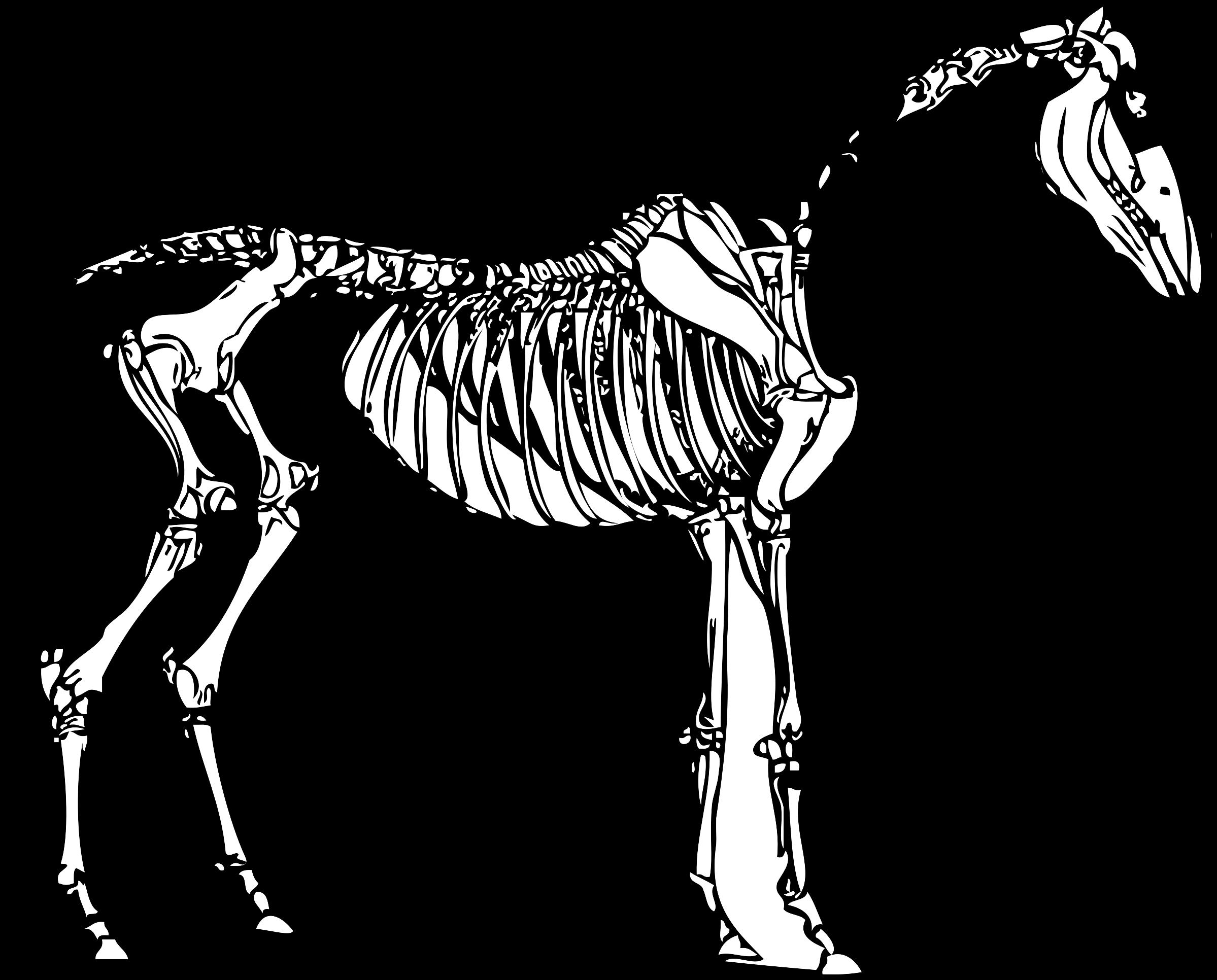 Horse Skeletal System Blank Diagram Trusted Wiring Diagram