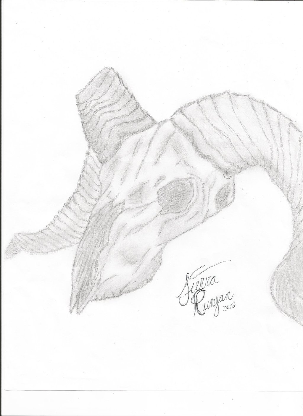 1024x1408 Ram Skull Drawing (Finished) By Horse Creek Ranch