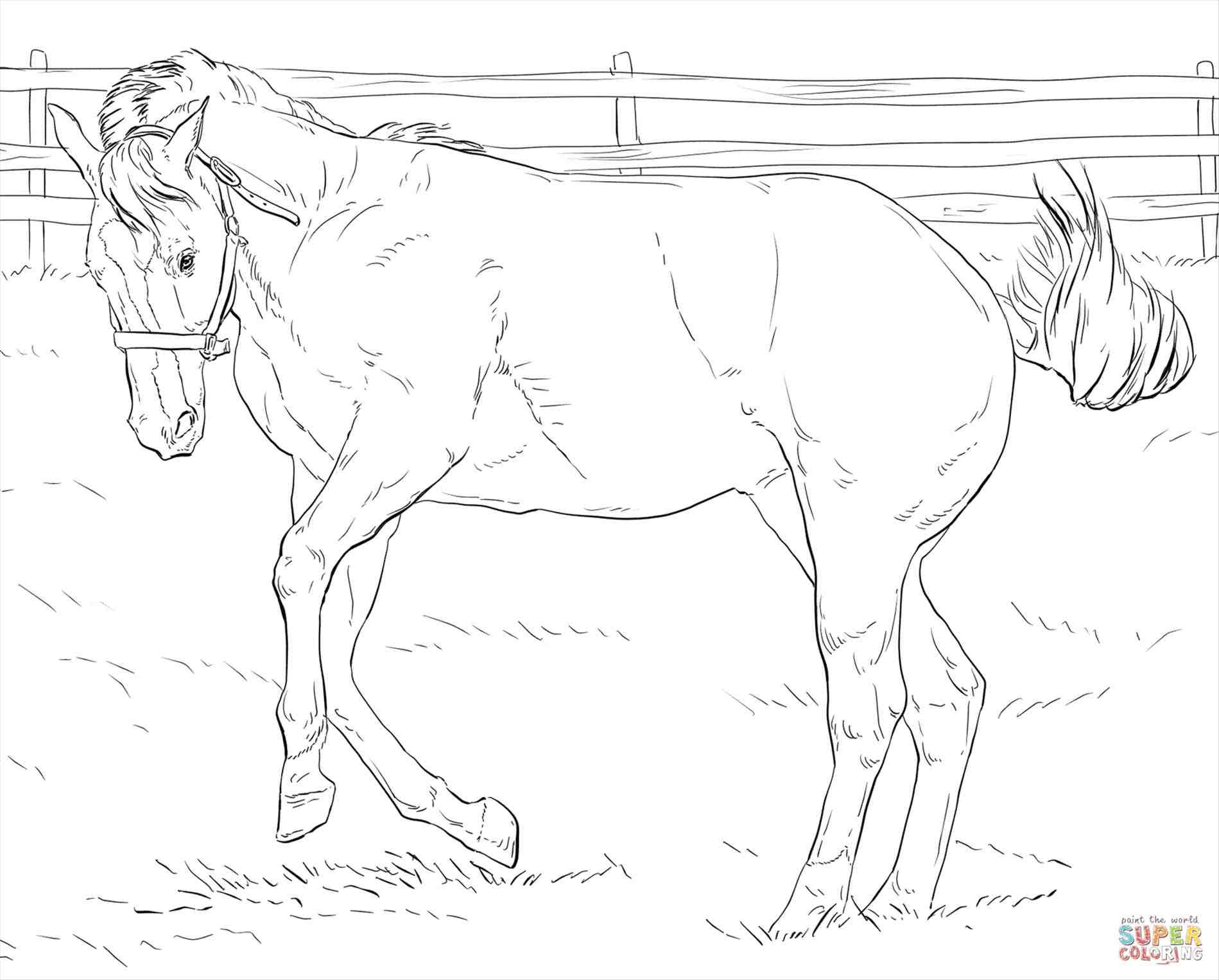 1899x1526 Pin Drawn Horse Mustang Horse 6. How To Draw A Barb Horse Step 1