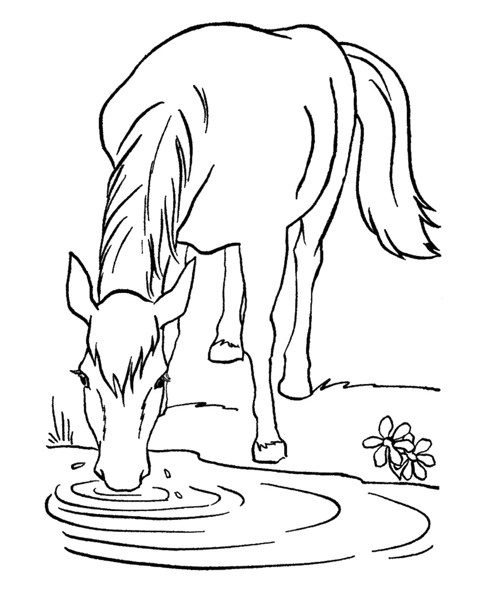 980x1200 Coloring Pages Horse Trailer Best Of Horse Coloring Pages