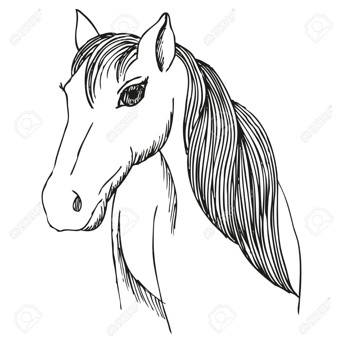 1300x1300 Hand Drawn Horse With Long Mane And Bang, Vector Sketch Of Mare