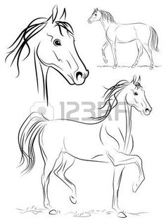 236x317 Silhouette Of Horse. Vector Linear Drawing Photo Animaux Que J