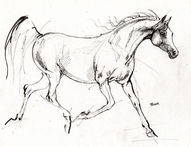 736x568 321 Best Equine Art Images