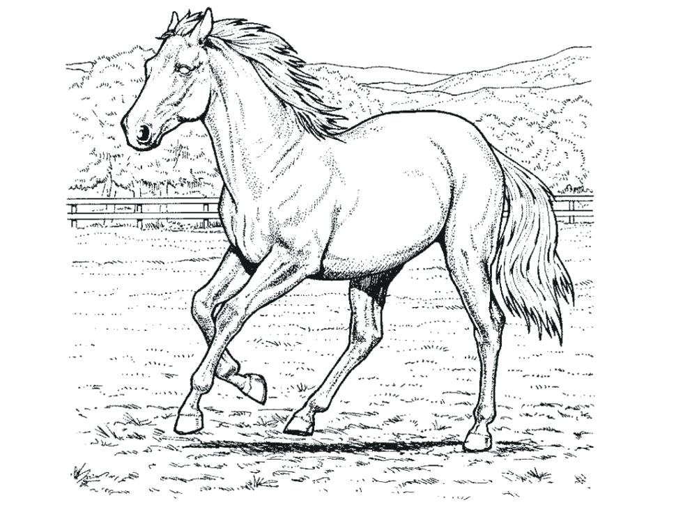 970x728 Horse Head Coloring Page Awesome Free Horse Coloring Pages Images