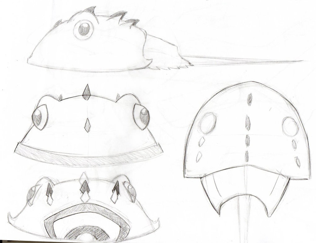 1019x784 Horseshoe Crab Sketch