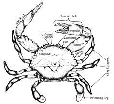 236x214 Chelicerata Fence Boards Designs Horseshoe Crab