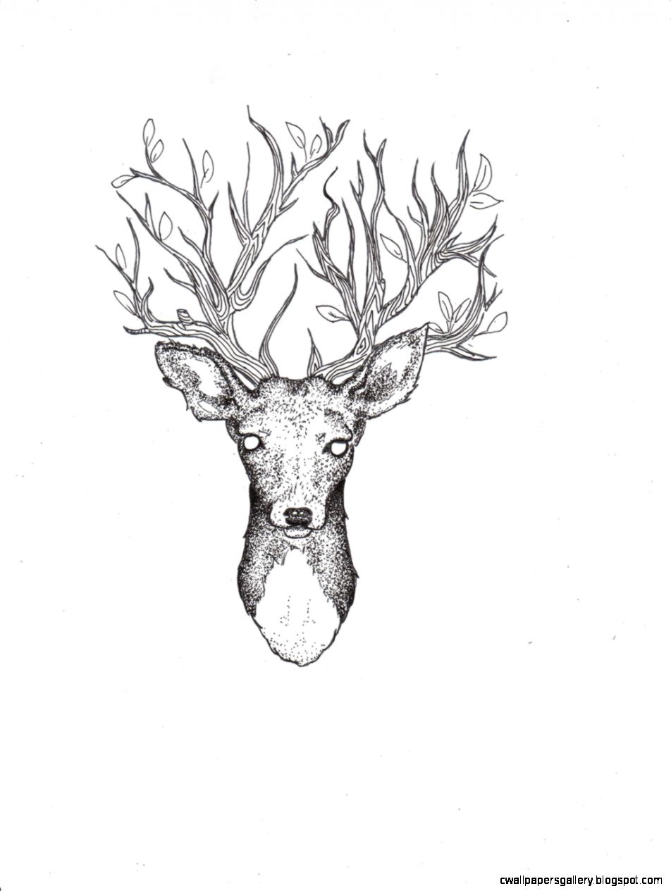 952x1265 Deer Drawing Tumblr Amazing Wallpapers Art And Culture