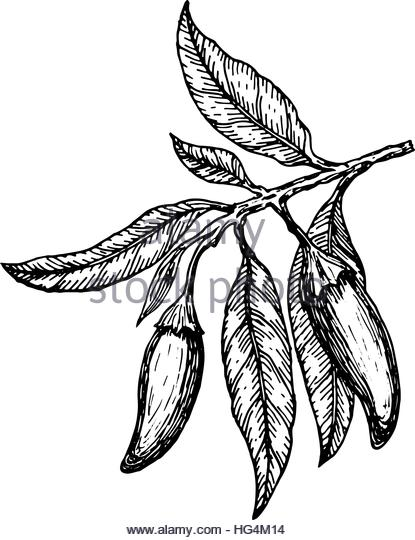 415x540 Chili Pepper Drawing Black And White Stock Photos Amp Images