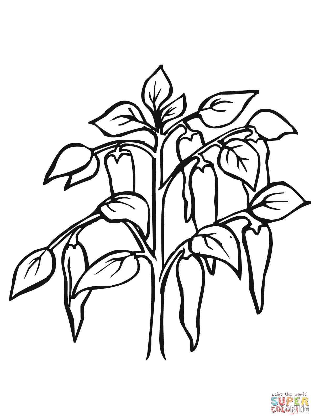 1200x1600 Chili Pepper Plant Coloring Page Free Printable Coloring Pages