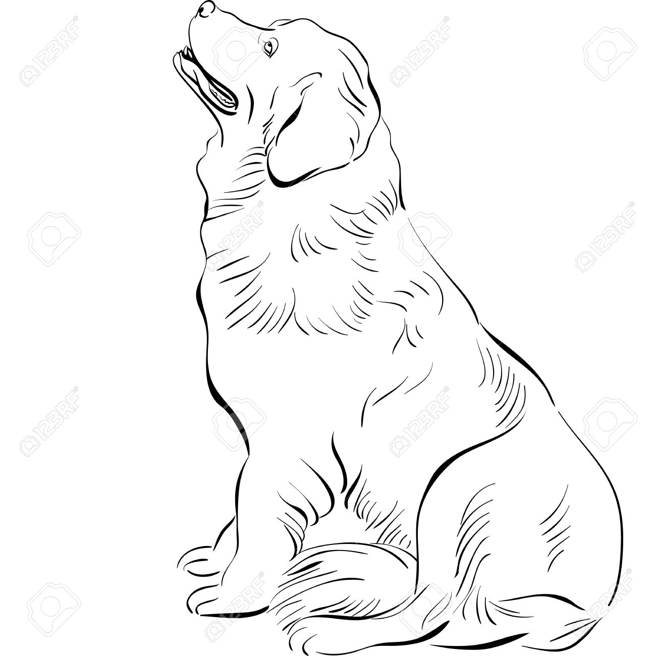 1300x1300 Black And White Sketch Of The Dog Newfoundland Hound Breed Sitting