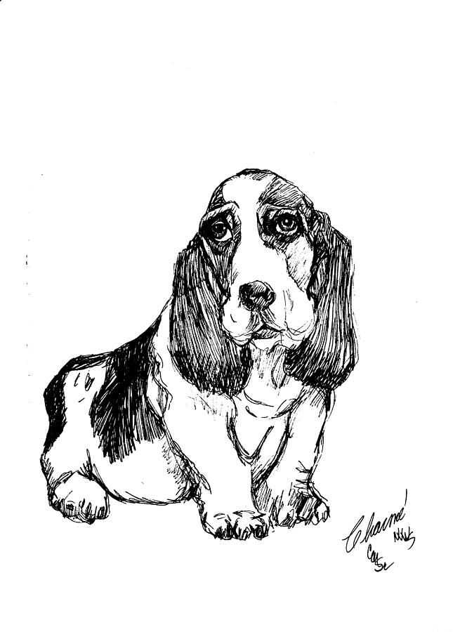 655x900 Basset Hound Drawing By Charme Curtin