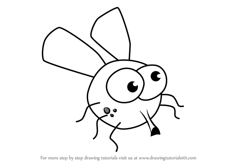 800x567 Learn How To Draw House Fly For Kids (Animals For Kids) Step By