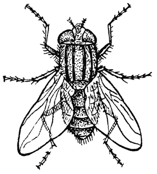 307x341 Coloring Page Housefly Coloring, Printable Free
