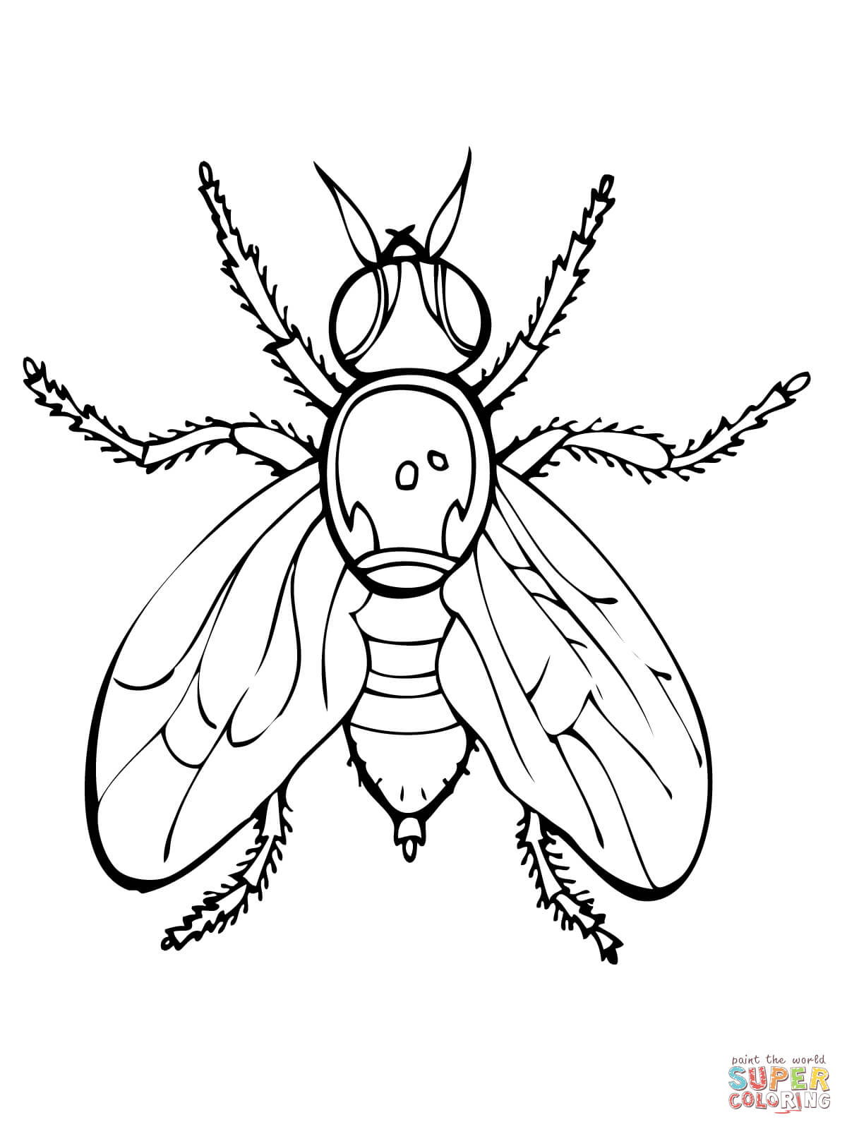 1200x1600 Fruit Fly Coloring Page Free Printable Coloring Pages