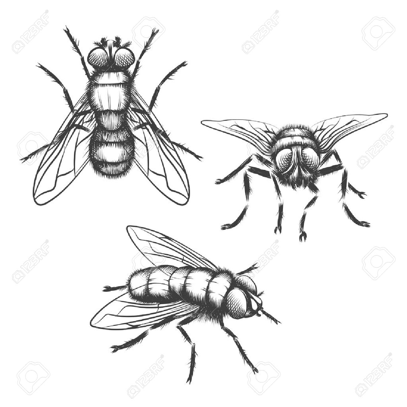 1300x1300 Hand Drawn Flies. Insect With Wing, Biology And Sketch, Vector