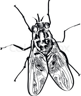 269x320 Hand Drawn Sketch Of Fly Isolated, Black And White Cartoon Vector