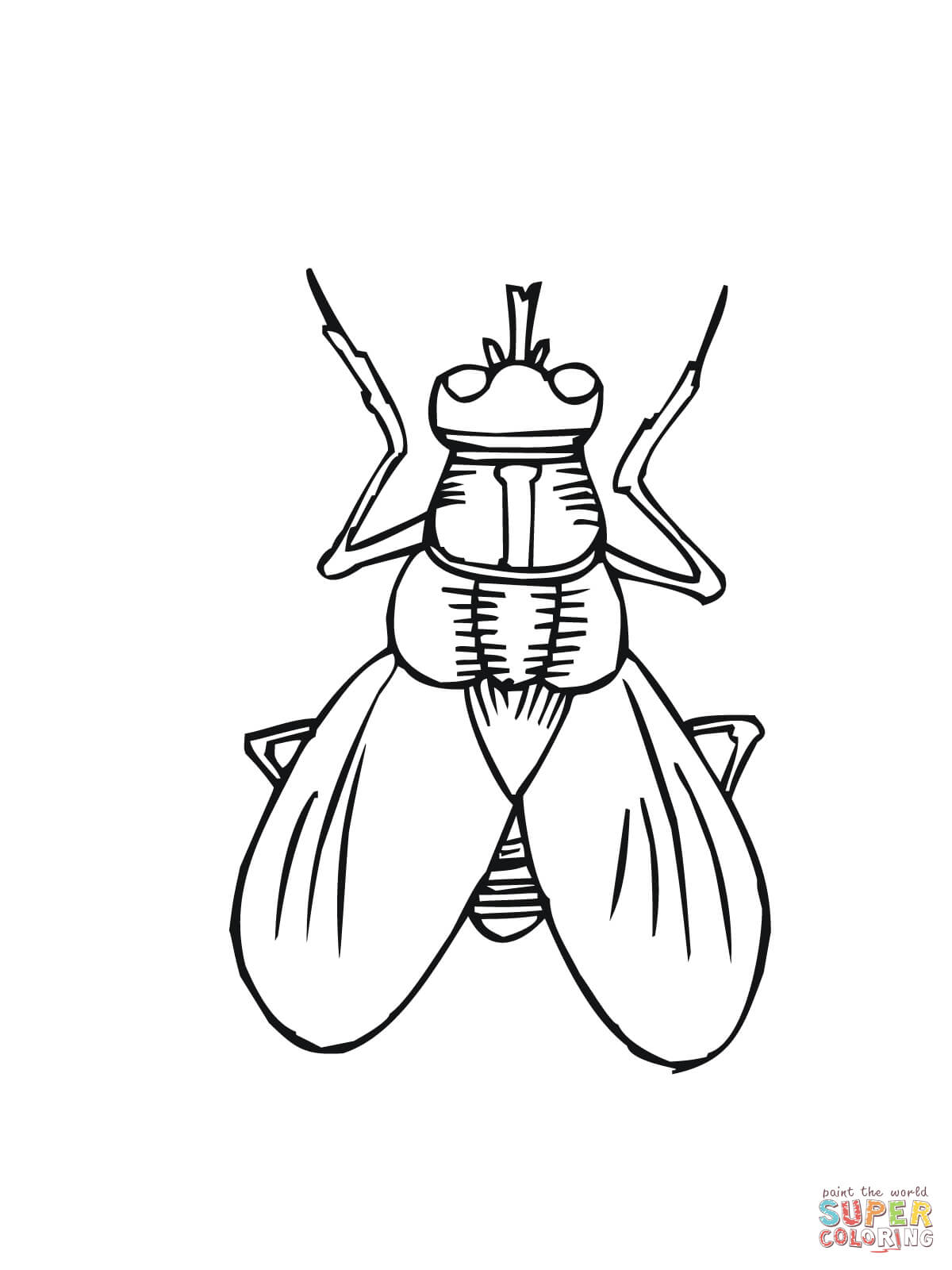 1200x1600 House Fly Coloring Page Free Printable Coloring Pages