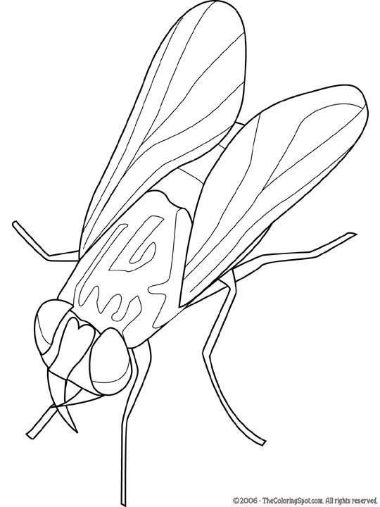 540x720 Housefly Audio Stories For Kids Amp Free Coloring Pages From Light