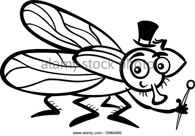 640x447 Housefly Black And White Stock Photos Amp Images