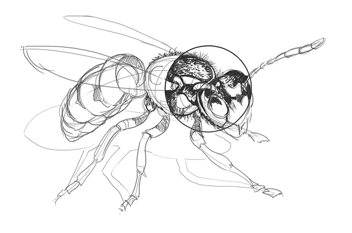 720x478 Lesson 4 Drawing Insects And Arachnids