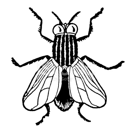 440x440 Black And White House Fly Stock Vector