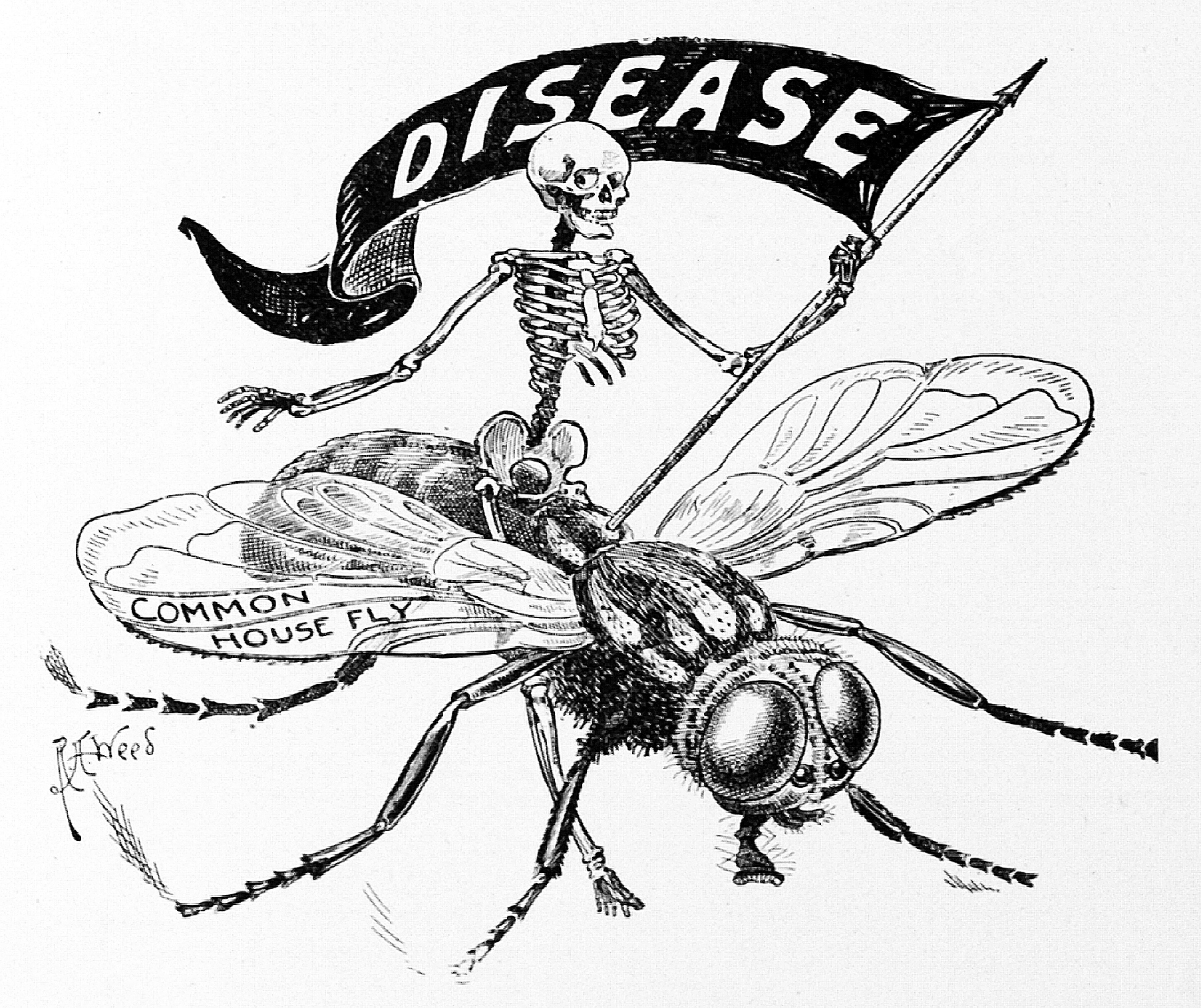 1805x1515 Cartoon Illustrating House Fly Carrying Disease.