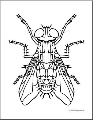 304x392 Clip Art Insects Housefly (Coloring Page) I Abcteach