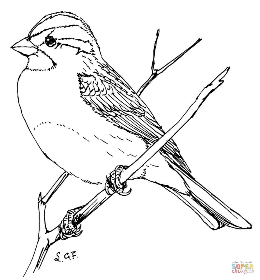 910x980 White Throated Sparrow Coloring Page In Outline