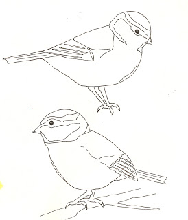 274x320 Blue Tit Line Drawing