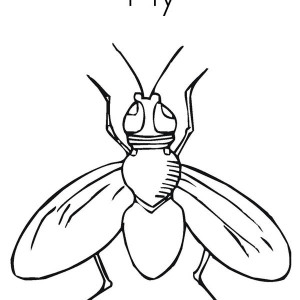 300x300 Drawing Fly Coloring Page Coloring Sky