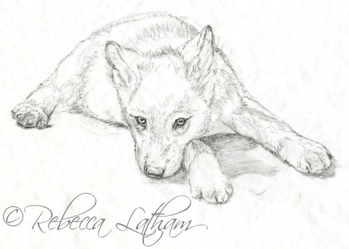 504x360 Modern Wolf Drawings Wolfpuppyrl081.jpg House