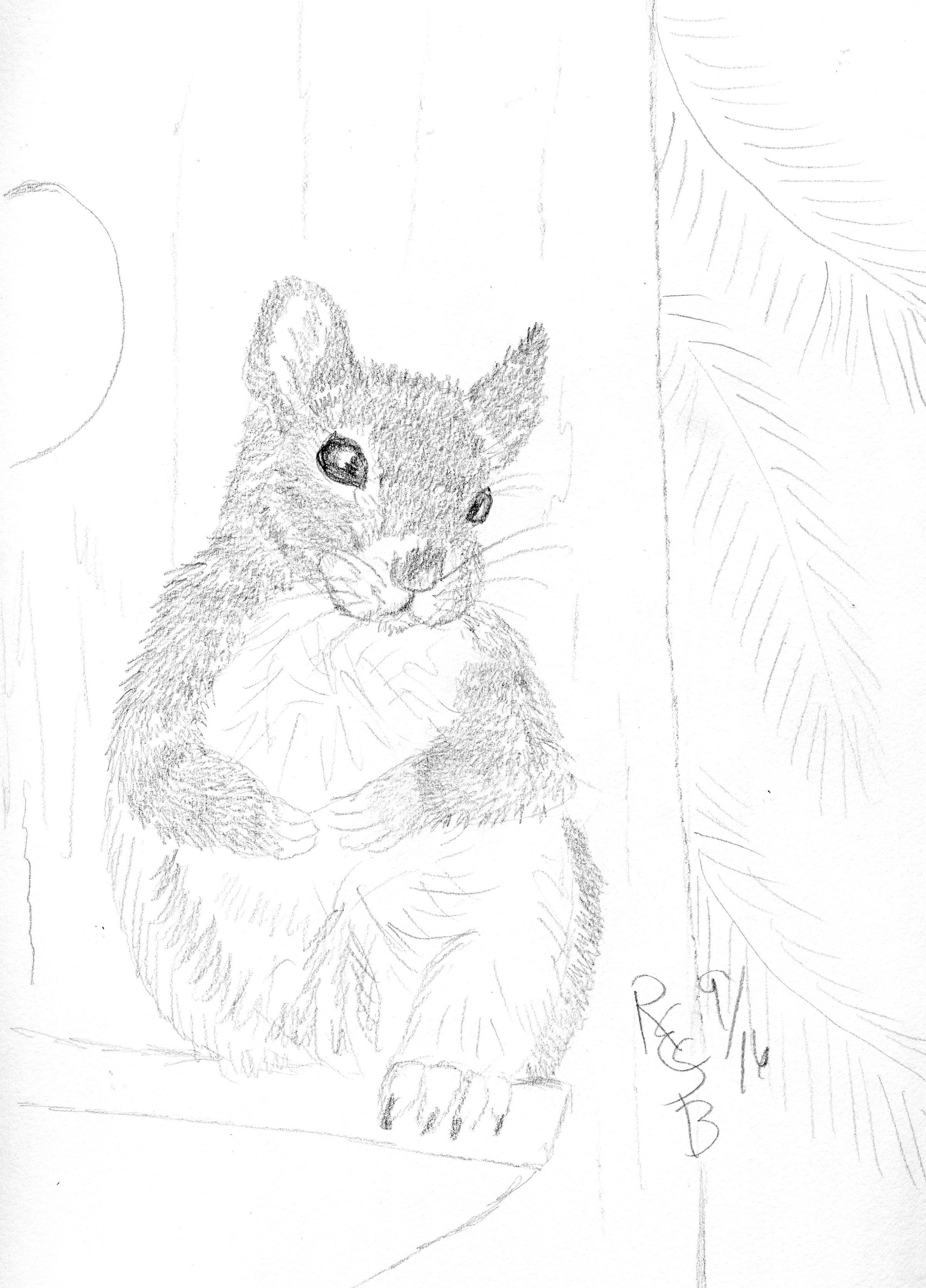 2400x3336 Squirrel Sitting On Bird House My Original Art Work