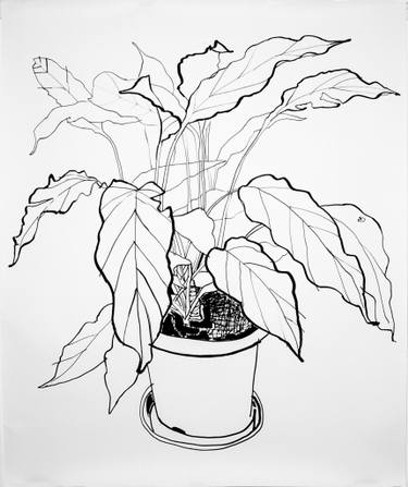 375x447 House Plant Drawings For Sale Saatchi Art