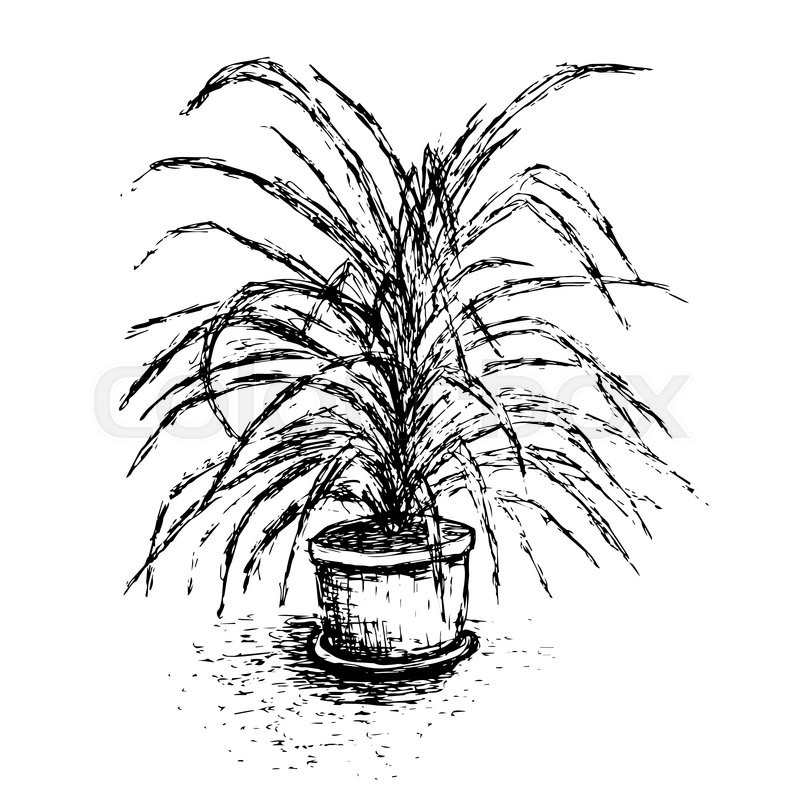 800x800 House Plant In Flower Pot Isolated On White Background. Palm Tree