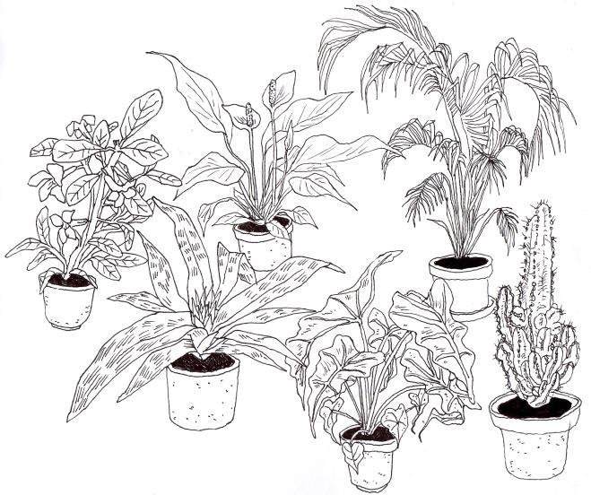 659x552 Pastoralist I Simply Love Drawings Of Houseplants.